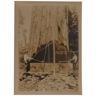 14 Promotional Photographs of Little River Redwood Co. Operations in Crannell, California