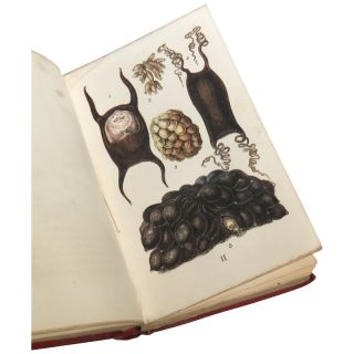 Common Objects of the Sea Shore; Including Hints for an Aquarium